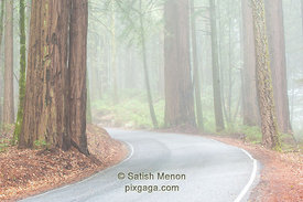 Road in Morning Fog, Big Basin Redwood State Park, Boulder Creek, CA, USA