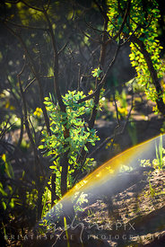 Fynbos regeneration after fire