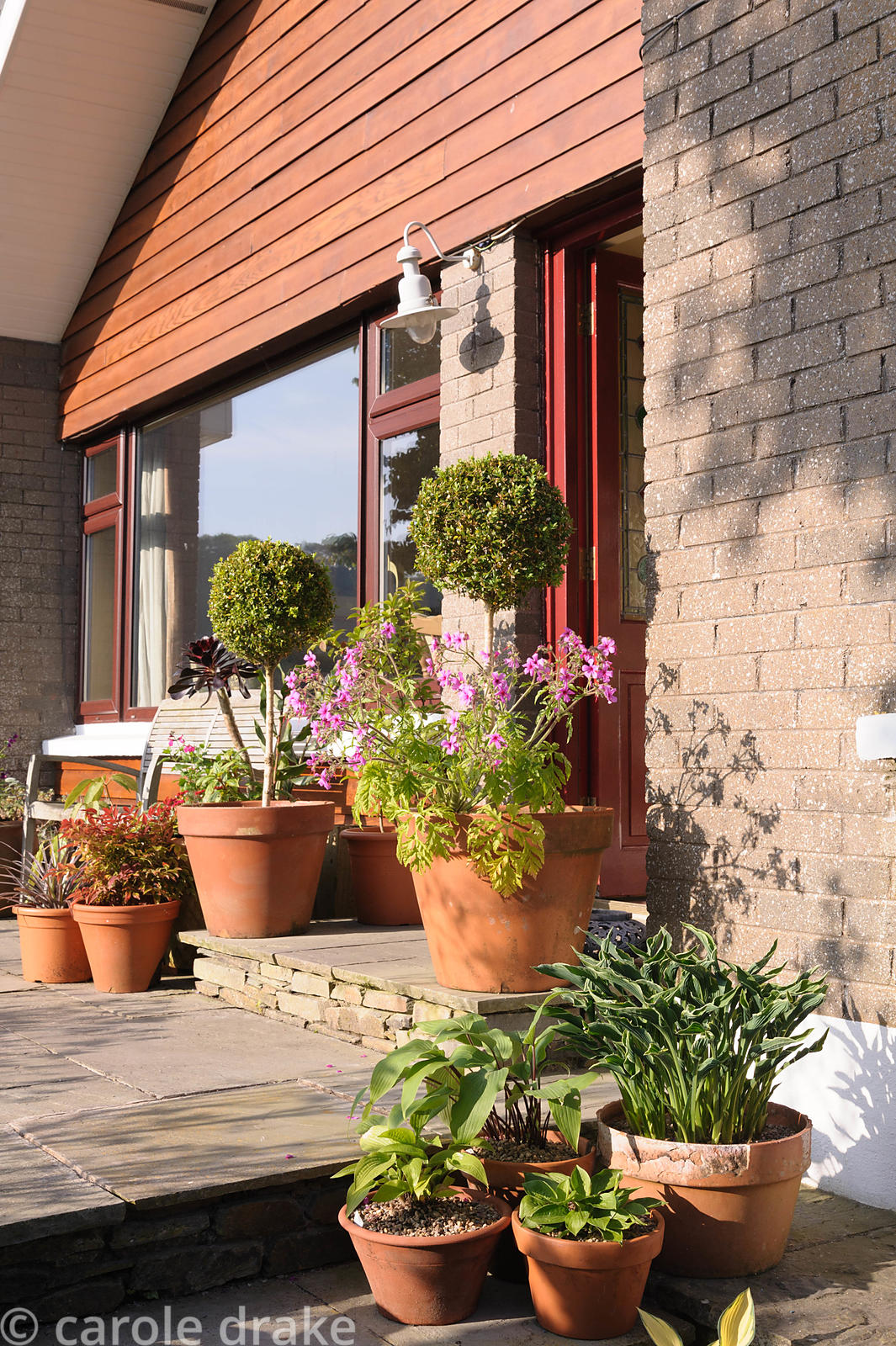 Terracotta pots arranged around the front door are planted with miniature and small hostas, clipped box and Geranium palmatum.