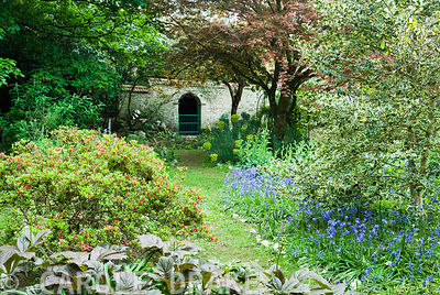 The Flower Garden, a mix of shrubs, trees and herbaceous plants all mixed with bluebells. Enys Gardens, St Gluvias, Penryn, C...