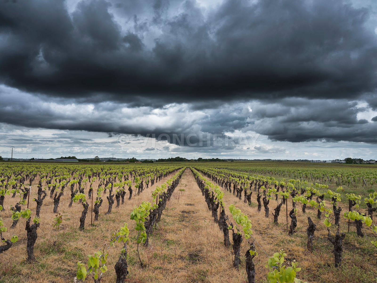 vignoble nantais