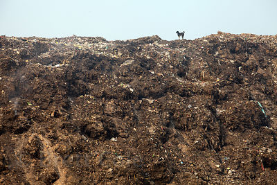 A stray dog stands on top of the Dhapa landfill, Kolkata, India. Dhapa is the main landfill for Kolkata's 13 million people.