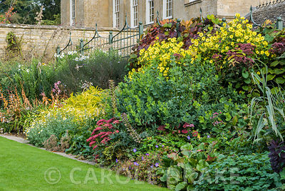Autumn border of bergenias, sedums, yellow helianthus backed by Vitis cognetiae. Bourton House, Bourton-on-the-Hill, Moreton-...