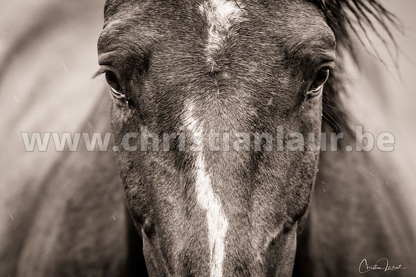 Fine art prints available on request