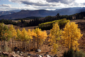 Absaroka Fall Colors