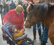 Young follower meets a pony at the meet
