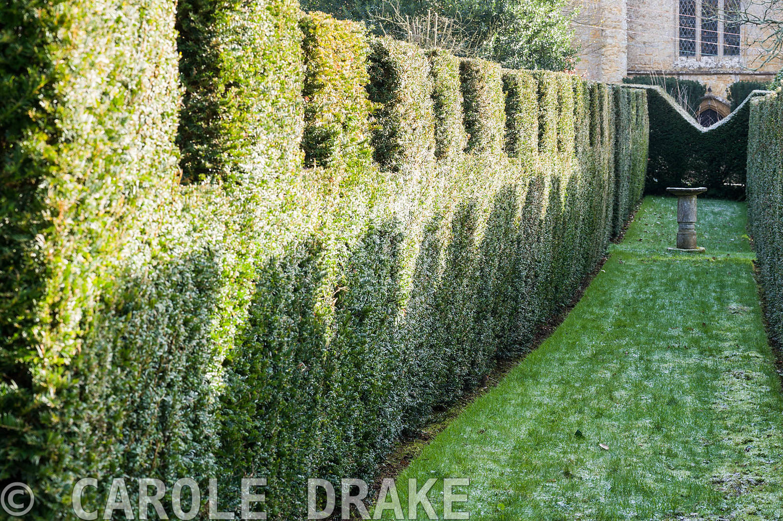 Crenellated yew hedge frames grass leading to a birdbath.