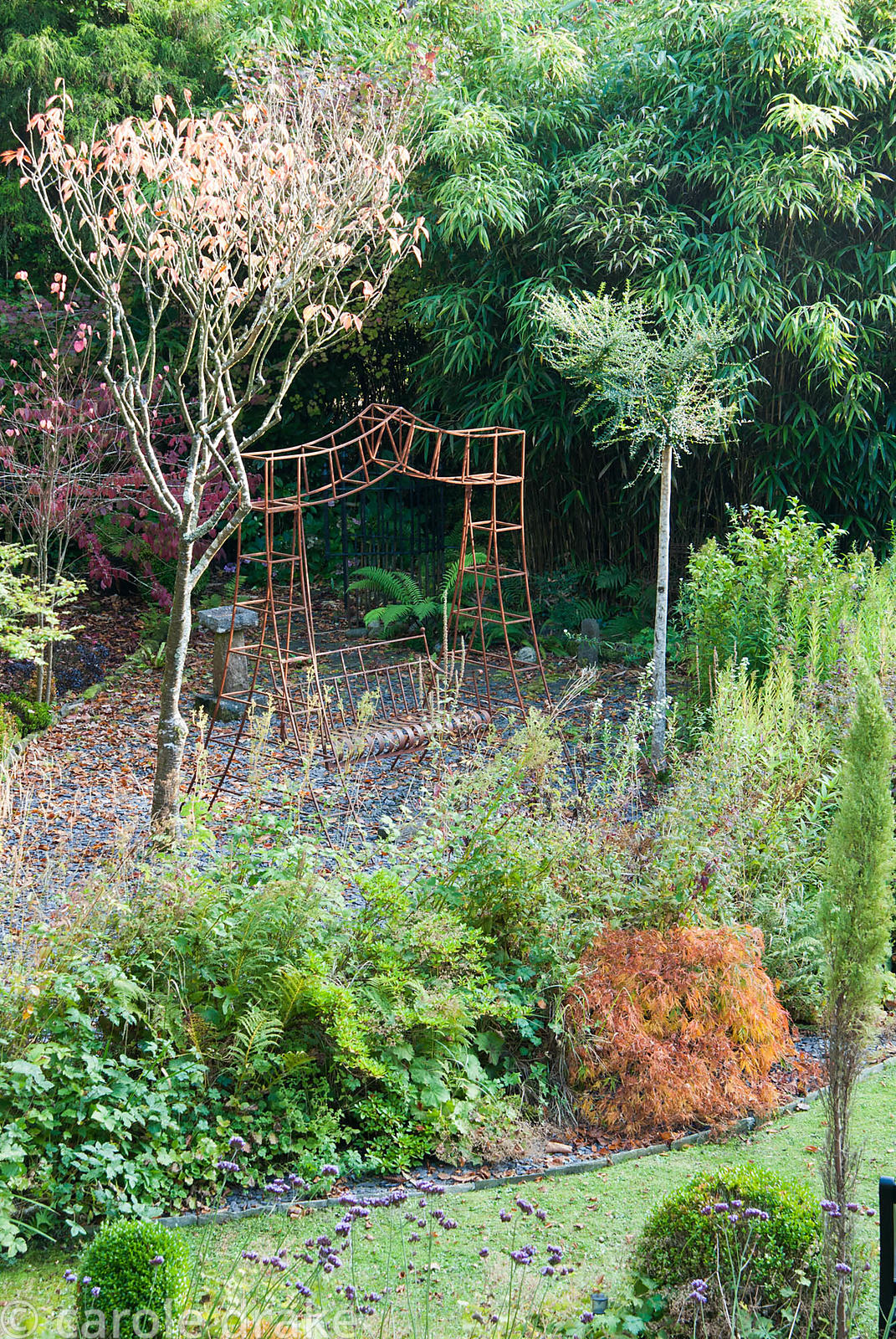 Metal framed swing seat picks up the autumn colouring of Acer palmatum 'Dissectum'. The Cors, Laugharne, Camarthenshire, Wale...