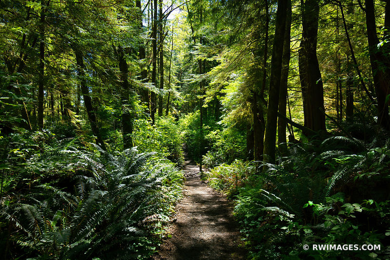 SHI SHI BEACH TRAIL PACIFIC NORTHWEST FOREST OLYMPIC NATIONAL PARK WASHINGTON