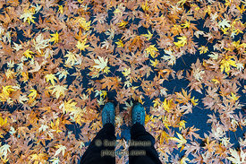 Fall Leaves and Legs on Parking Lot, Morgan Hill, CA, USA