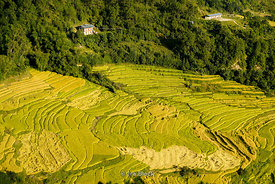 Terraced rice fields in Punakha, Bhutan.