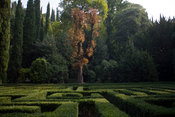 Italy - Verona - Details of the maze and trees in the Giardino Giusti