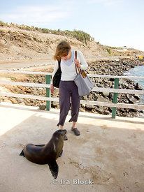 A woman approaches a sea lion on a pier in the Galapagos.