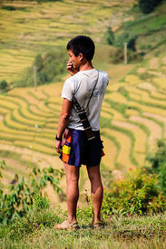 Hmong Man Looking Out Over Rice Paddies