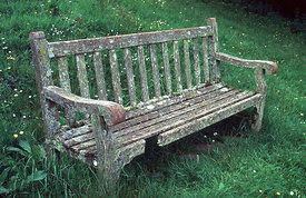 June - Old Bench