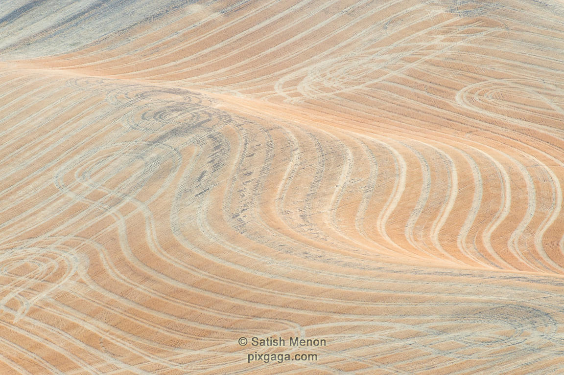 Wheat Fields and Patterns, Palouse Region, Washington, USA