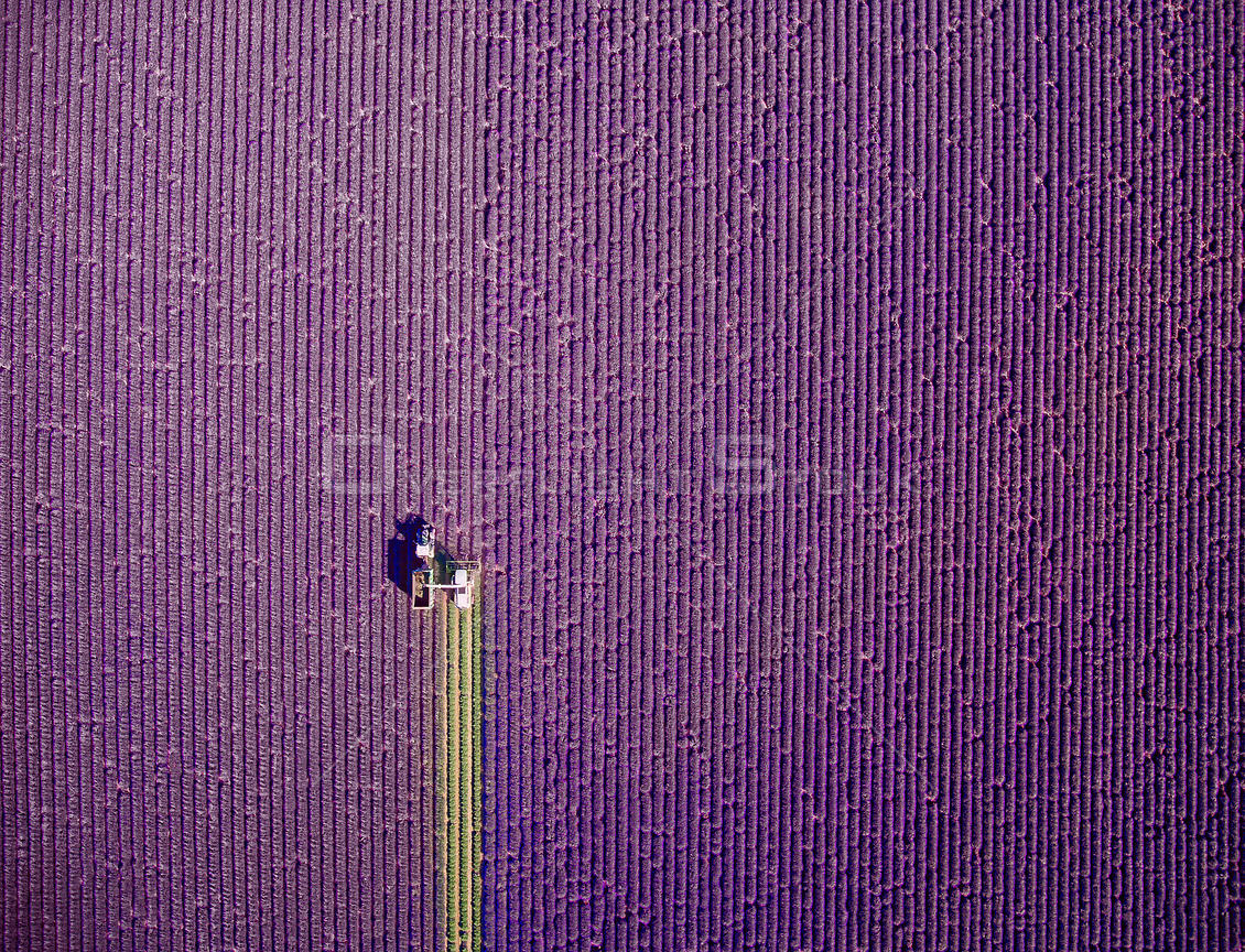 Lavender Harvest Provence France Drone Photo jcourtial.