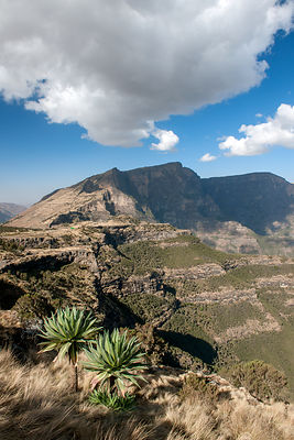 Expansive view of Simien Mountains National Park  including the Giant lobelia (Lobelia rhynchopetalum)  Semien Gondar Zone, A...
