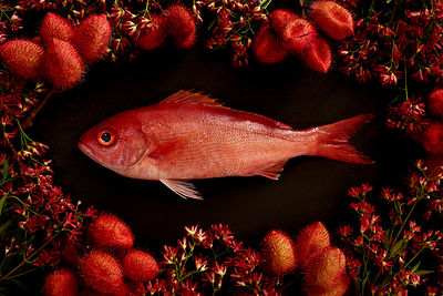Fish-Red-Snapper-Botanical-0033