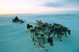 Japanese explorer, Naomi Uemura, on his way to the North Pole via his dog sled