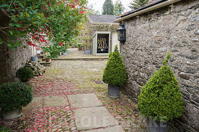 Courtyard with clipped box and traditional auricula theatre. Summerdale House, Lupton, Cumbria, UK