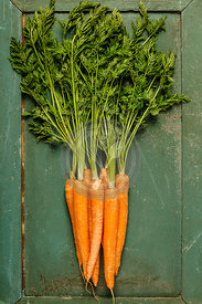 Fresh carrot bunch on rustic green background