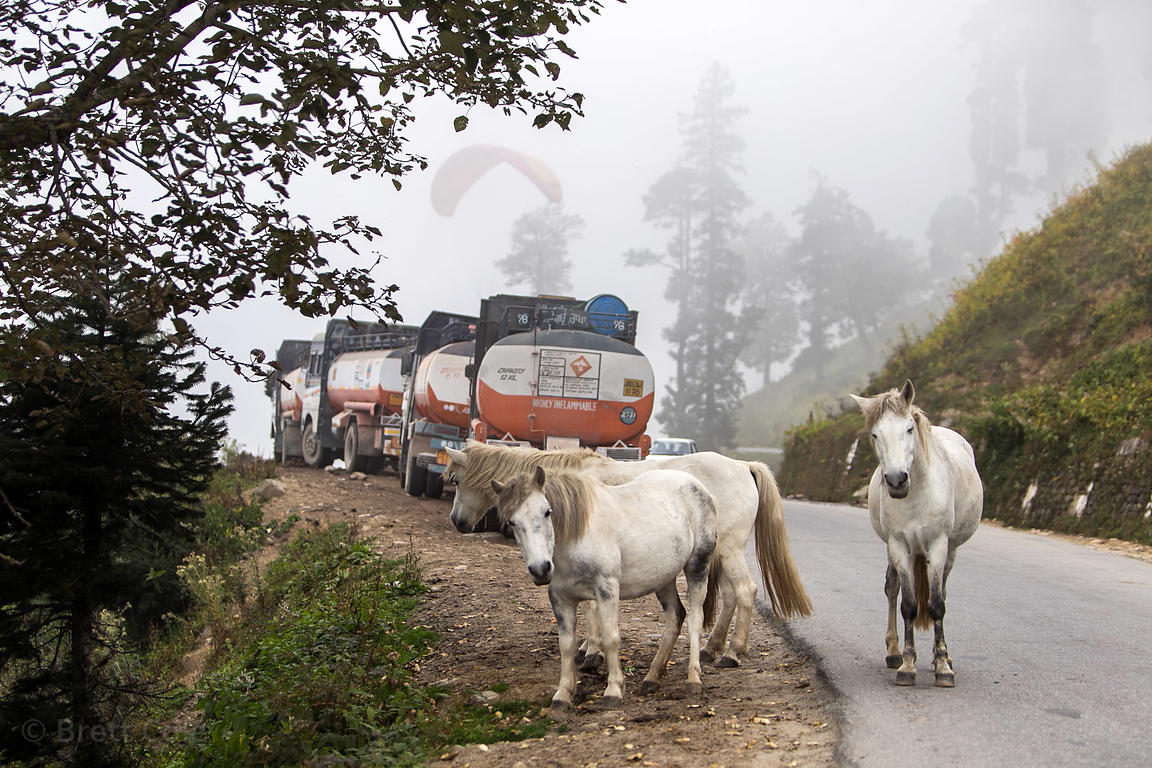 Horses, paragliders and Indian oil trucks on the way to Rohtang Pass, Manali, India