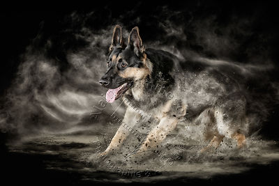 Art-Digital-Alain-Thimmesch-Chien-784