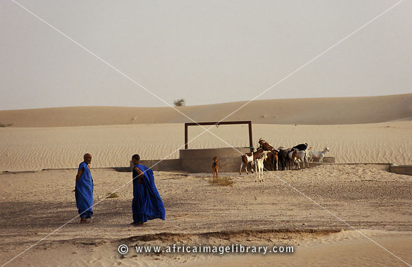 Tuareg with goats at a well in the Sahara desert, outside Timbuktu, Mali