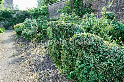 Flock of topiary box birds in the kitchen garden. Rodmarton Manor, Rodmarton, Tetbury, Glos, UK