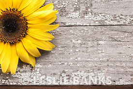 Yellow Sunflower on a Vintage Wooden Table