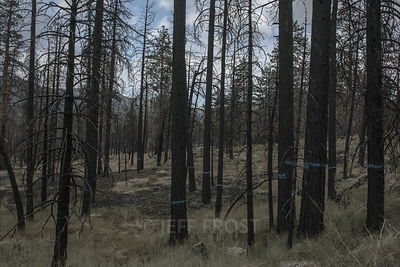 20170726.Blue.Trees.LakeFire.aftermath-1001_1