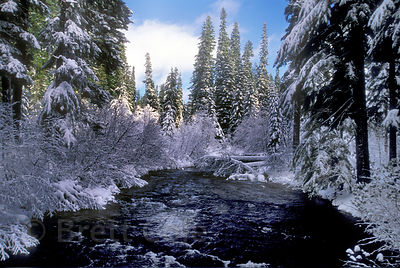 A beautiful Winter scene in the snowy subalpine forests along Salt Creek, Willamette Pass, Oregon Cascades.