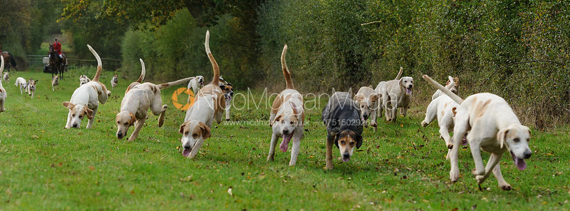 The Cottesmore Hunt at the kennels 23/10