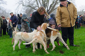 A young supporter is greeted by some Cottesmore hounds - The Cottesmore Hunt's Boxing Day meet 2013.