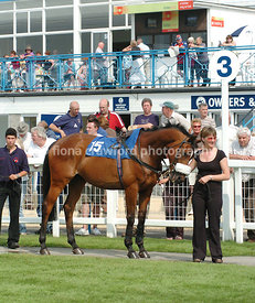 Horse stood in the parade ring