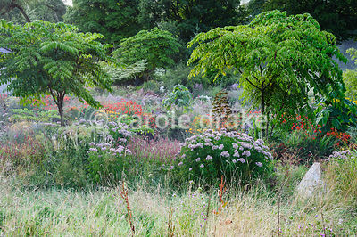 View down onto multicoloured herbaceous planting including Eupatorium cannabinum, persicaria, heleniums and crocosmias set am...