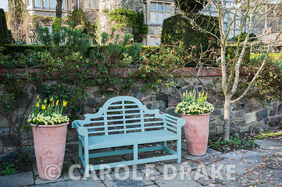 Lower terrace with bench framed by pots of Tulip 'West Point' and limey green euphorbias, plus magnolia and weeping silver pe...