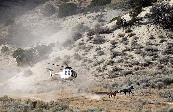 The wranglers cowboys capture mustangs on the set of Mares Canyon near the town of Meeker, Colorado.