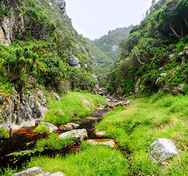 Fynbos stream through forest gorge