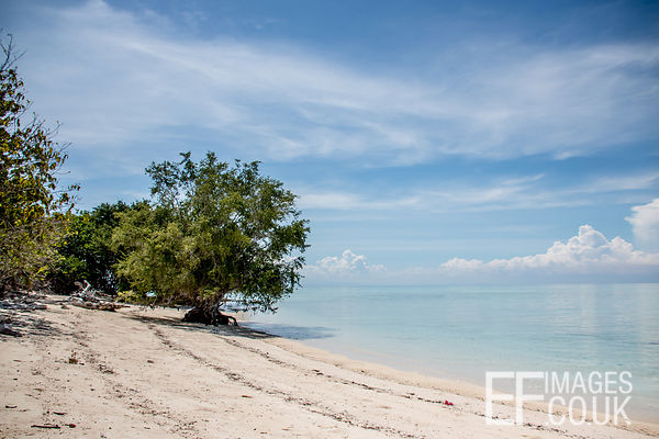 Tropical Beach With Large Mangrove Tree