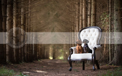 two little dogs posing together on antique chair in forest