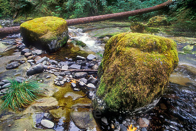 Mossy boulder in Wild and Scenic Quartzville Creek, Oregon Cascades.