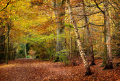 Eastham Country Park in Autumn