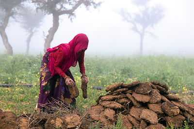 A woman makes fuel from dried cow dung patties, Nagaur village Rajasthan, India