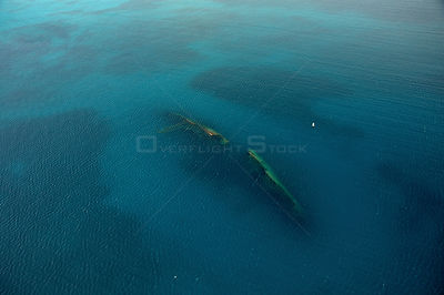 Wreck of the MS Antilla, aerial shot. Ship scuttled 10th May 1940. Aruba, Dutch Antillies.