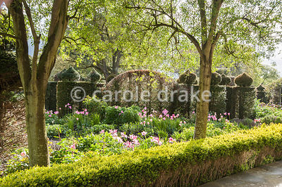 The Elliptical Garden features clipped yew, low box hedging, and lots of tulips in spring time. Holker Hall, Grange over Sand...