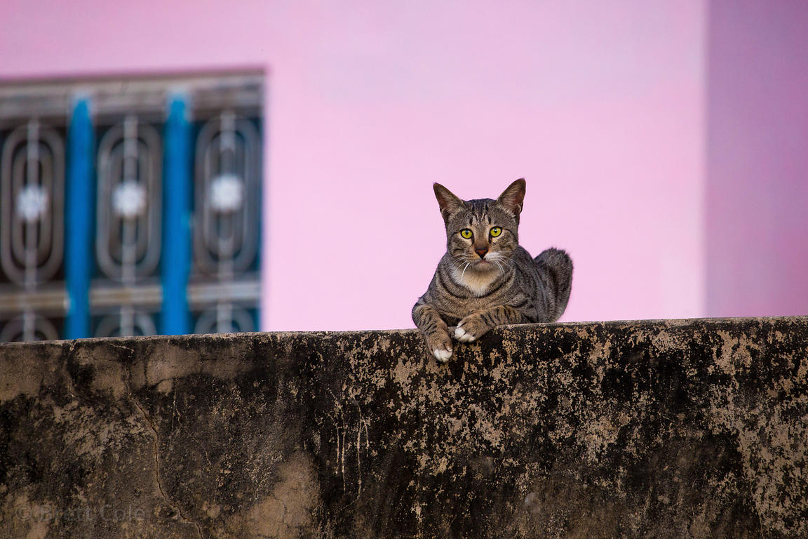 Kitty on a ledge in Devnagar village, Rajasthan, India. Cat ownership is not very common in Rajasthan.