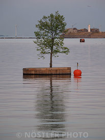 A tree in the harbour
