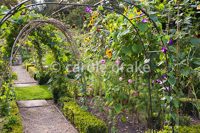 Hazel arches trained with gourds in the Tunnel Garden used for growing fruit, vegetables and flowers for cutting. Heale House...